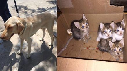 Más de 100 quejas al mes por maltrato de perros y gatos en Chiclayo