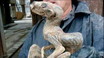 Extraño ser momificado fue hallado en Siberia