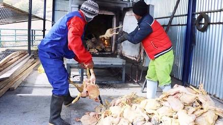 Huancavelica: incineran 365 pollos en mal estado incautados por la DIRESA