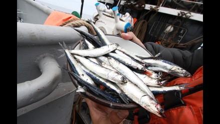 Produce: El decreto 011 no funcionó, la pesca de anchoveta será de la milla 5