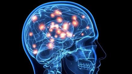 Descubren que el cerebro tiene 180 áreas