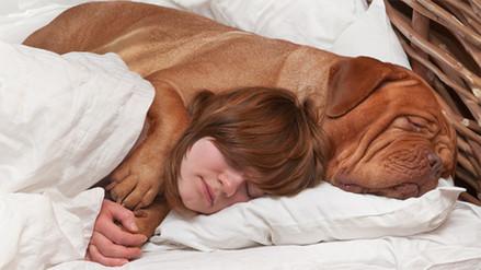 Dormir con tu perro puede mejorar la calidad de tu sueño