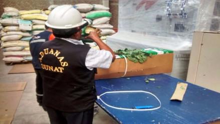 Decomisan más de 48 mil rosas y claveles de contrabando