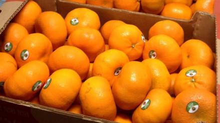 Perú inició exportaciones de mandarina a Brasil