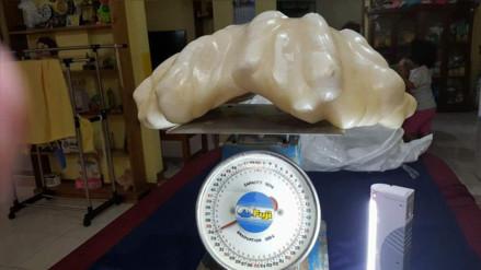Facebook: pescador guardaba en su casa una perla de $100 millones