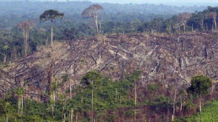 El 97% de las áreas con mayor biodiversidad del planeta han sido dañadas