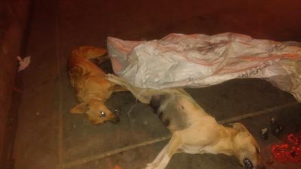 Huamachuco: envenenan perros callejeros en mercado de abastos