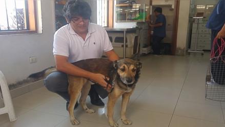 Perro que recibió paliza de profesor dejará veterinaria tras 25 días