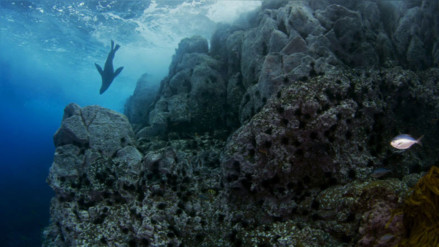 Chile tendrá el parque marino más grande de América