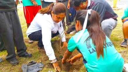 Siembran 300 plantones de algarrobo y otras especies forestales por el día del árbol