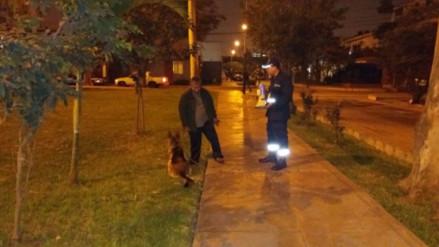 Surco multó a más de 1,300 vecinos por no recoger excretas de sus mascotas