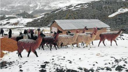 Comunidades de Puno soportan temperaturas de 15° bajo cero