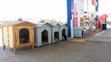 La historia tras la foto de las casas para canes en el grifo de Huancayo