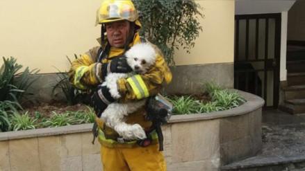 Rescatan a un pequeño perro de un incendio en Surco