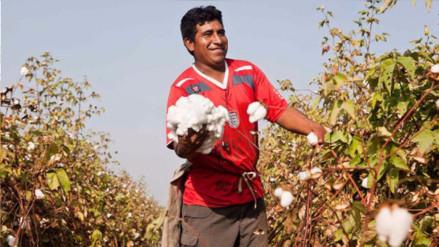Estos son los 10 principales destinos de la agroexportación peruana