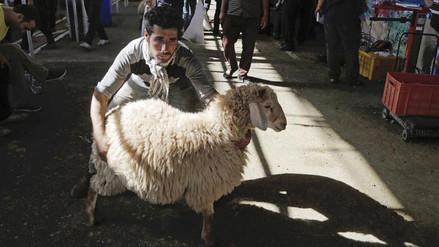 Millones de musulmanes participan de la 'Fiesta del Sacrificio' en todo el mundo