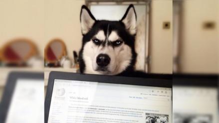 Facebook: Anuko, el perro que ayuda a costear los estudios de su dueña