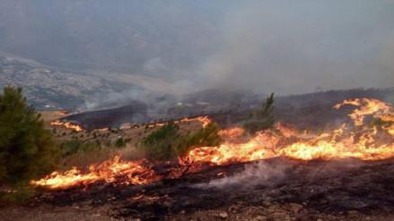 S.O.S: incendios forestales arrasan miles de cultivos en La Convención