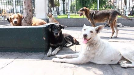 Minsa: El 90% de animales que se encuentran en las calles tienen familia