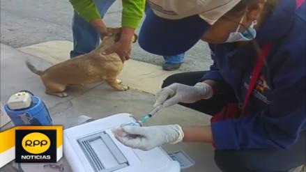 Realizan última campaña de vacunación contra la rabia en Arequipa