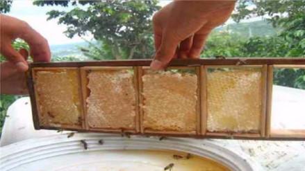 Producción de miel bajó en 60% por altos índices de deforestación