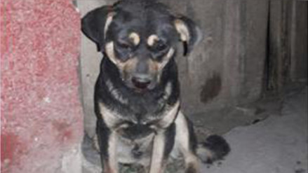 Andahuaylas: sujeto detenido por violencia familiar y maltrato animal