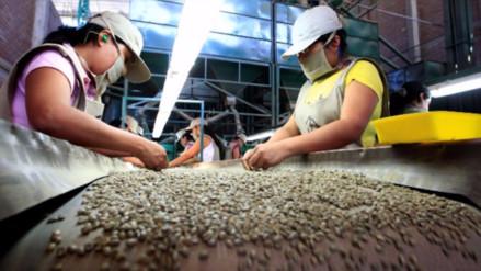 JNC: Perú exportó 2 millones 250 mil quintales de café a agosto