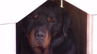 Reportan dos mil 700 casos de mordeduras de canes