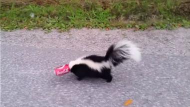 YouTube: pese a su miedo, un hombre rescata un zorrillo atrapado en lata de gaseosa