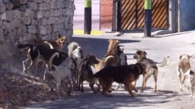 Piura: inicia implementación de ordenanza para protección animal