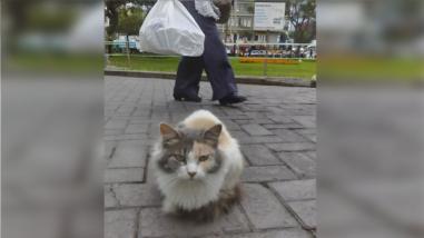 Los gatos del parque Kennedy de Miraflores fueron trasladados a un albergue