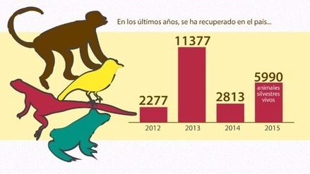 El tráfico ilegal de animales silvestres en el Perú / GRÁFICA