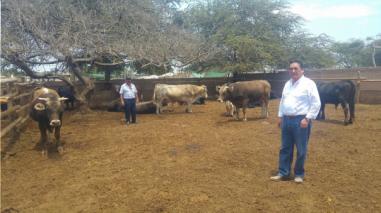 Tres mil ganaderos de Lambayeque afectados por escasez de pasto