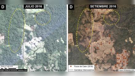 Quemas para cultivo han deforestado 600 hectáreas de bosque en Madre de Dios