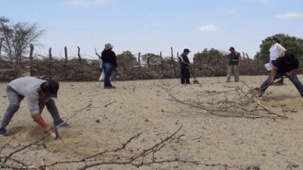 Sentenciados por tala ilegal siembran plantones para cumplir con su condena