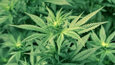 Hallan marihuana en una tumba china de 2,000 años de antigüedad