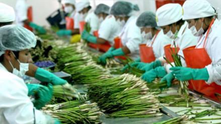 Exportaciones agrarias sumaron US$ 3,239 millones entre enero y agosto