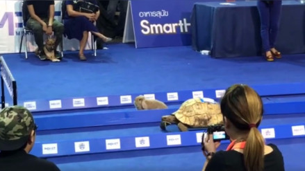 Facebook: un experimento prueba si la tortuga puede ganarle a la liebre en una carrera