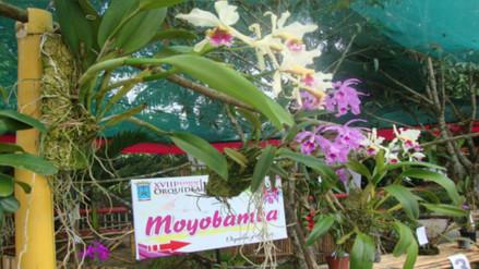 Moyobamba realiza 21 Festival de la Orquídea y la Exposición Internacional