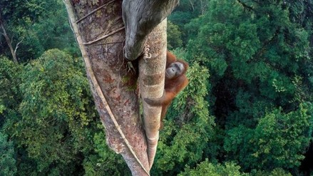 Las mejores fotos de la vida animal tomadas en el 2016