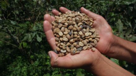 ¿En qué regiones se cultivan los mejores cafés del Perú?