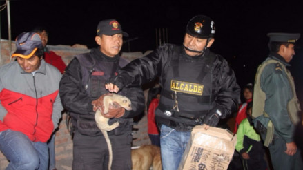 Encuentran suricata en Miraflores