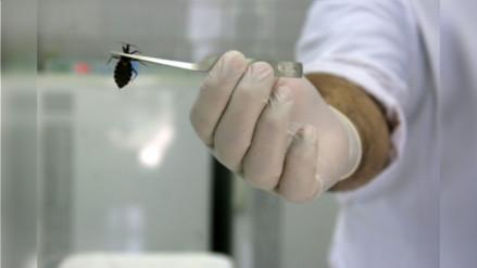 Advierten presencia de plaga de Chirimachas en Moquegua