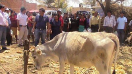 Lambayeque: entregan 622 kits veterinarios a ganaderos  de Mórrope