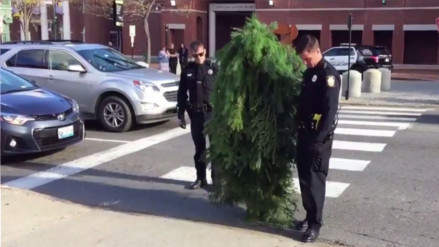 Twitter: Policía de EE.UU. detiene a un 'árbol' que obstaculizaba el tránsito