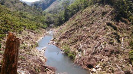 Denuncian deforestación en la cabecera del río Shima