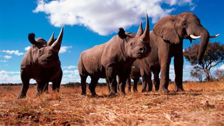 WWF: La vida silvestre en el mundo se redujo en un 58% desde 1970