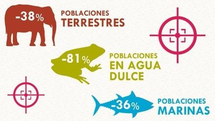 Las especies del mundo han disminuido en un 58%