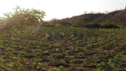 Lambayeque: Agrorural apoyará a pequeños agricultores de Morrope