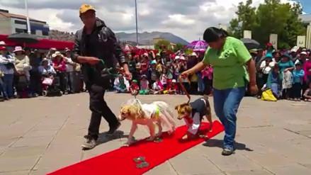 Seis parejas de perros contrajeron matrimonio simbólico en Cusco